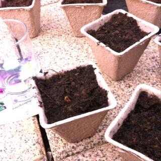 Pflanzenbehälter befüllen