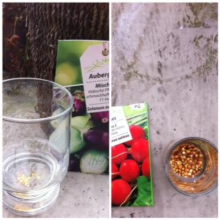 Samen im Wasser quellen lassen