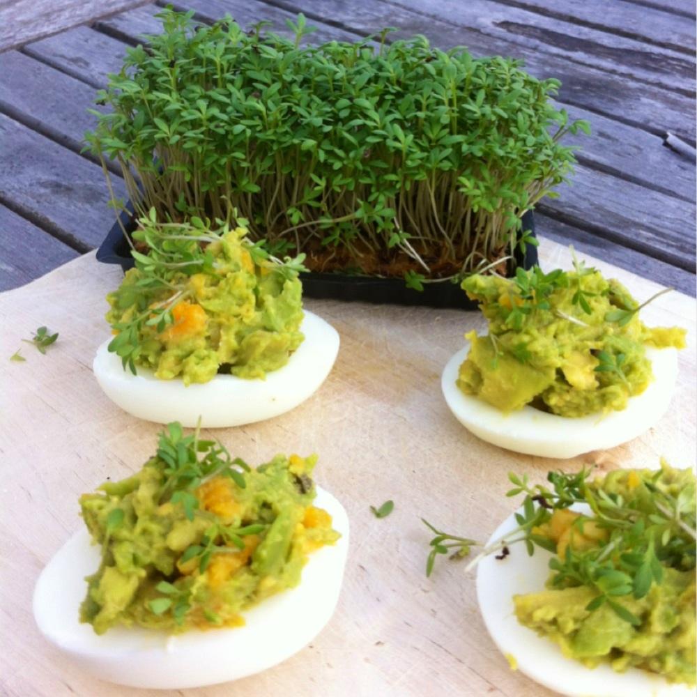 gefüllte eierhälften senf