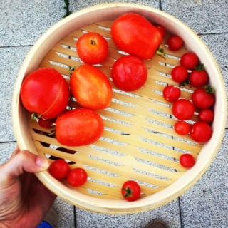 Dein eigener Gemüsegarten